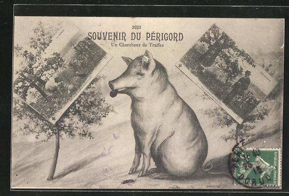 AK Souvenir du Périgord, Un Chercheur de Truffes, Trüffelschwein und Ansichtskartenmotive