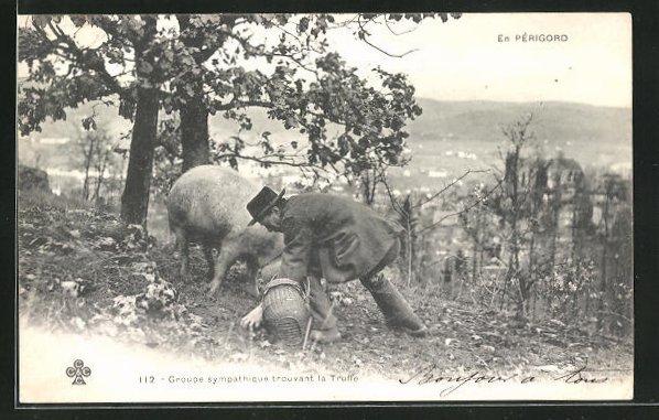 AK En Périgord, Groupe sympathique trouvant la Truffe, Trüffelschwein