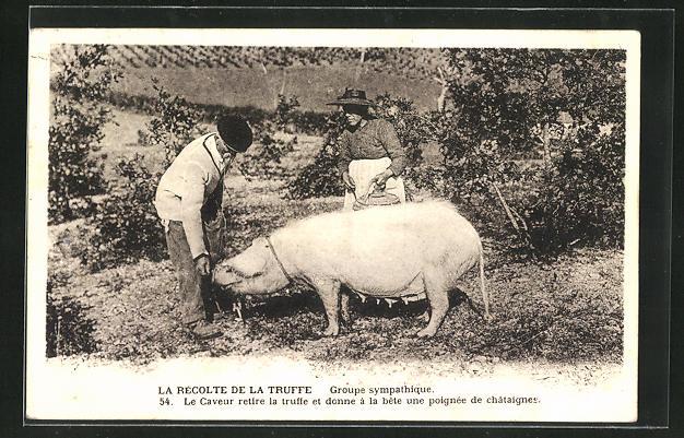 AK La Récolte de la Truffe, Paar mit Trüffelschwein