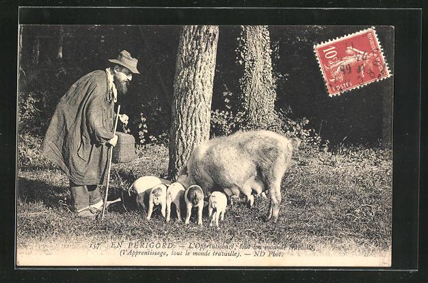 AK En Périgord, Trüffelschwein mit Ferkeln
