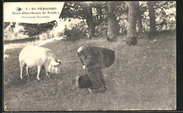 AK En Périgord, Deux Chercheurs de Truffes, Trüffelschwein