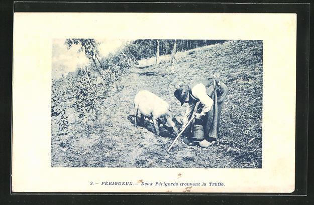 AK Périgueux, Deux Périgords trouvant la Truffe, Trüffelschwein