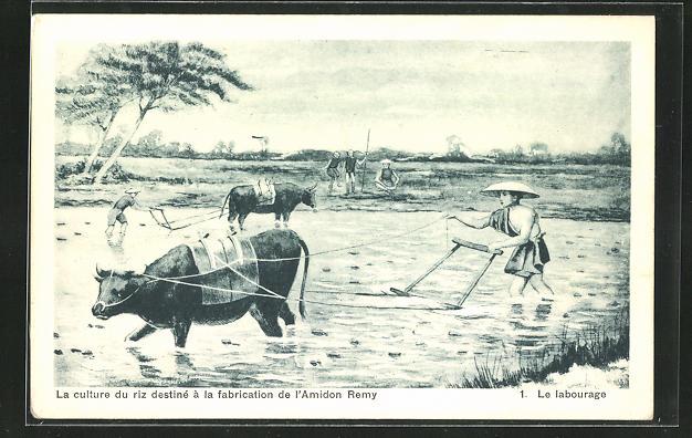 AK Landwirtschaft, Le labourage, La culture du riz destine a la fabrication de l`Amidon Remy