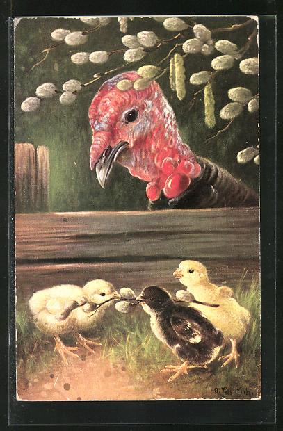 AK Truthahn beobachtet Hühnerküken