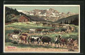 Präge-AK Sentum - Alpfahrt, Senner treiben ihre Rinder auf die Sommerweide
