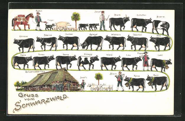 Präge-AK Senner treiben Kühe, Ziegen und Schweine von der Sommerweide zurück ins Tal