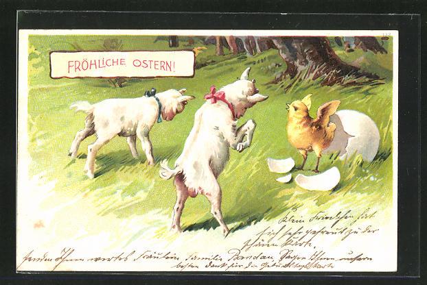AK Junge Ziegen und ein frisch geschlüpftes Küken