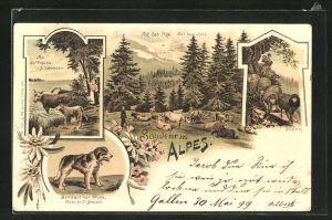 Lithographie Bernhardiner Hund, Kühe an der Tränke, Schafweg