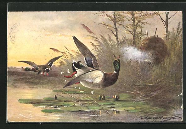 Künstler-AK M. Müller jun.: Jäger in Deckung schiesst auf eine Ente