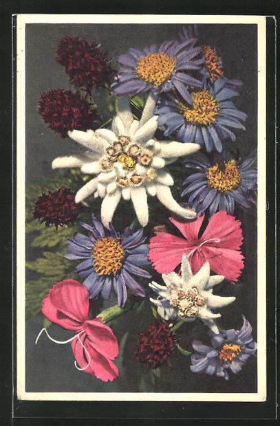 Foto-AK Emanuel Gyger: Dianthus sylvester, Aster alpinus, Nigritella augustifolie, Edelweiss, Etoile des glaciers