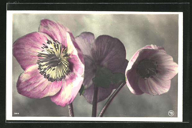AK Drei weiss und rosa gefärbte Blumen