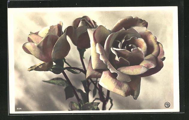 AK Gelb-rosa gefärbte Rosen