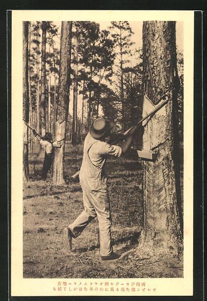 AK Georgia, Tapping a nubben tree 0