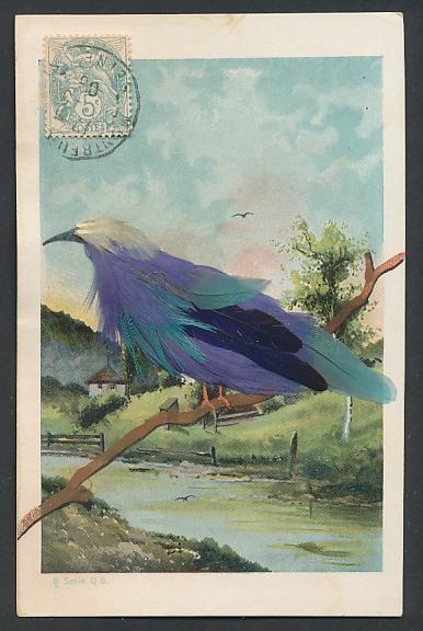 Echtfeder-AK Vogel mit blauen Federn an einem Fluss 0