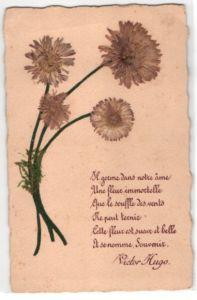 Trockenblumen-AK Getrocknete und gepresste Gänseblümchen, Vers von Victor Hugo