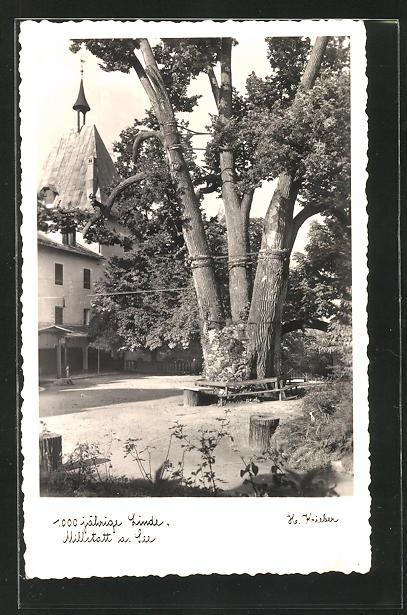 AK Millstatt am. See, 1000 jährige Linde