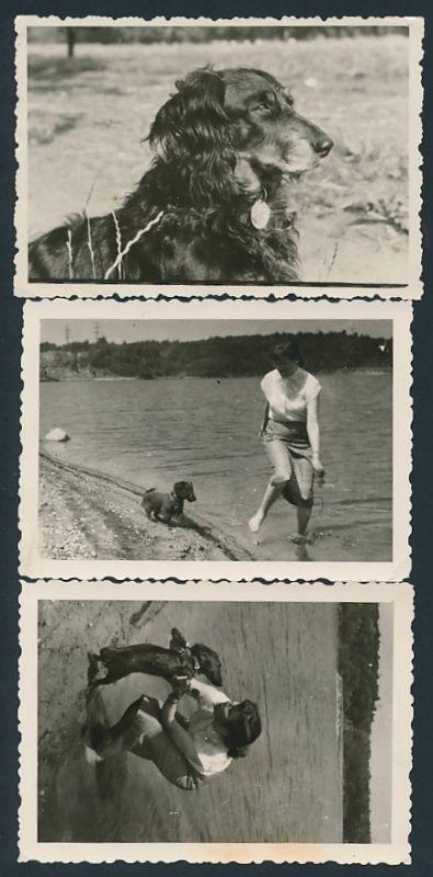 3 Fotografien Hund - Dackel, Langhaardackel & Frau spielen am Strand