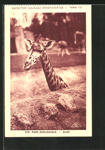 AK Paris, Zoo, Girafe, exposition coloniale internationale 1931