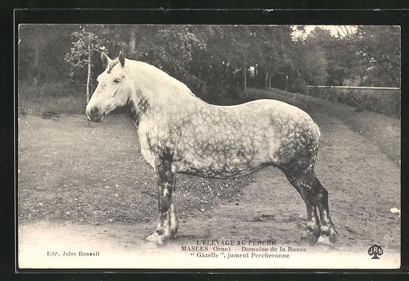 AK Masles, Domaine de la Ronce Gazelle, jument Percheronne, Pferd