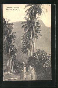 AK Dominica, Cocoanut Avenue