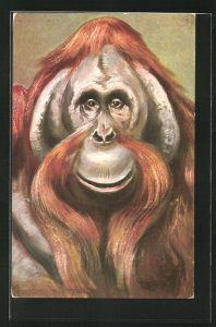 Künstler-AK Ermenegildo Carlo Donadini: Alter männlicher Orang-Utan