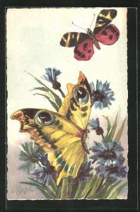 Künstler-AK Carlo Chiostri: Schmetterlinge auf Kornblumen
