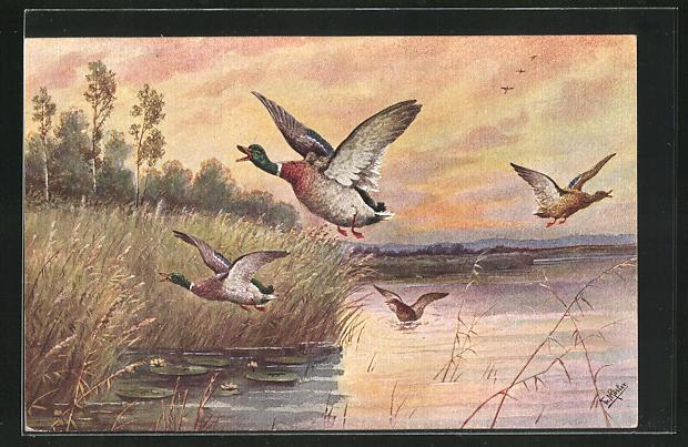 Künstler-AK Fr. Rösler: Stockenten fliegen über ein Seeufer