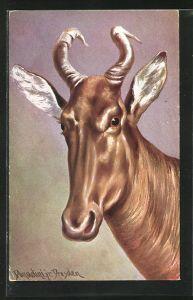 Künstler-AK Ermenegildo Carlo Donadini: Antilope mit Hörnern