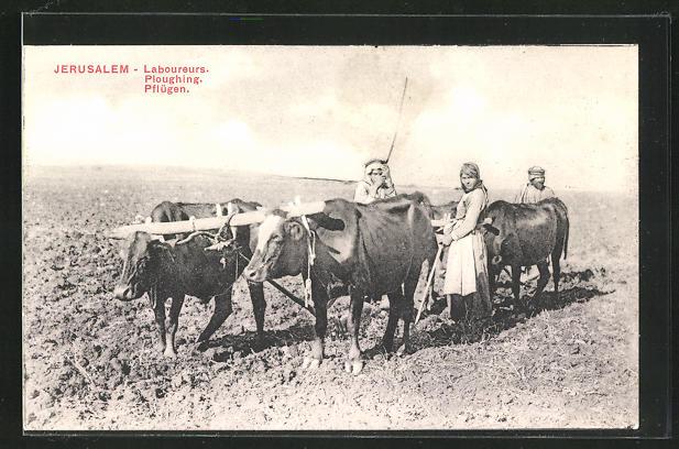 AK Jerusalem, Bauern beim Pflügen mit Gespann