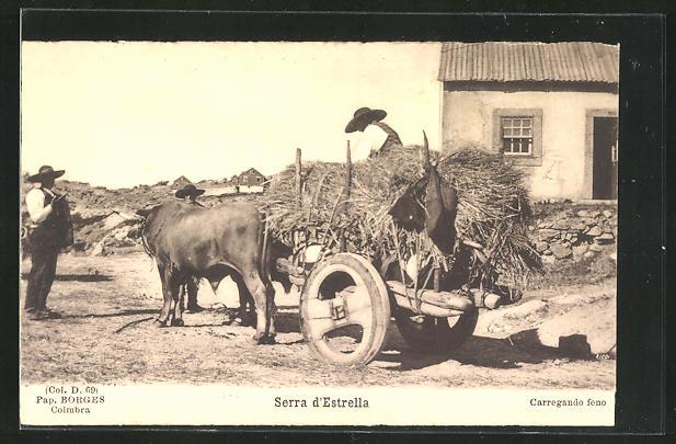 AK Coimbra, Serra d`Estrella, Bauer mit Ochsen-Gespann