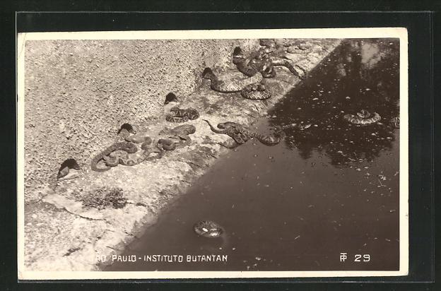 AK Sao Paulo, Instituto Butantan, Schlangen am Ufer