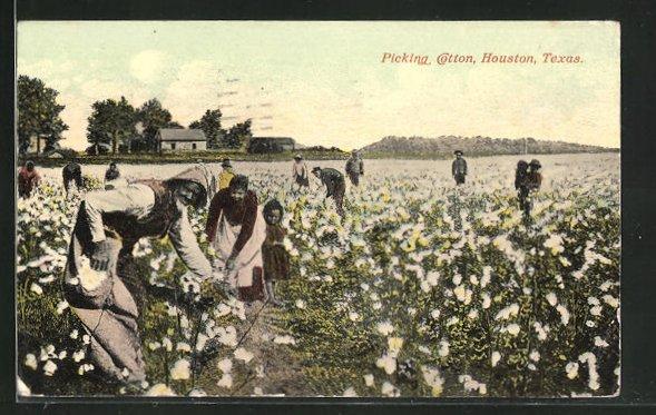 AK Houston, TX, Picking Cotton, Arbeiter auf den Baumwollfeldern