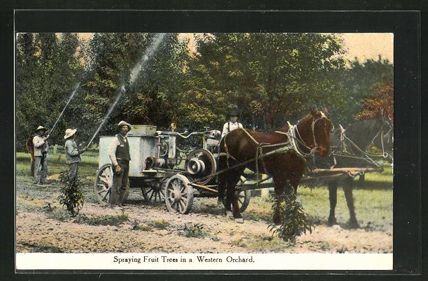 AK USA, Spraying Fruit Trees in a Western Orchard, Männer bewässern Obstbäume