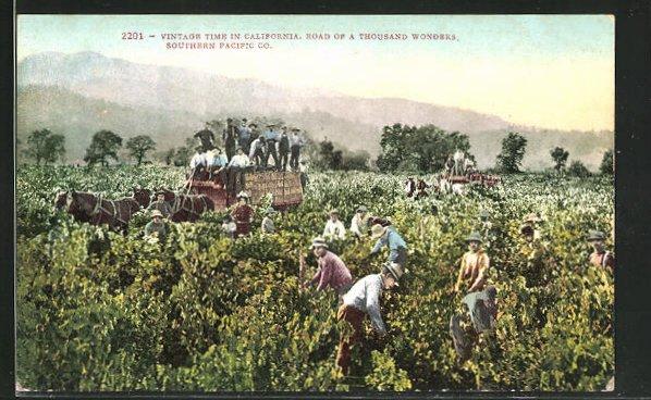 AK California, Männer bei der Weinlese