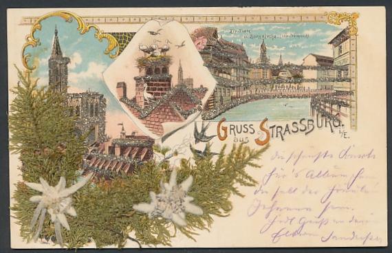 Trockenblumen-Lithographie Strassburg, Zix-Platz und Zionskirche, Getrocknetes Edelweiss und Moos