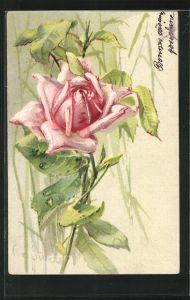 Künstler-Lithographie Clara von Sivers: blühende Rose