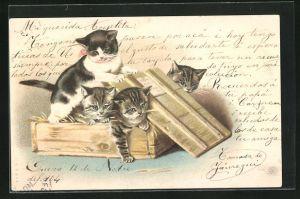 Lithographie Katzen haben sich in einer Holzkiste verkrochen