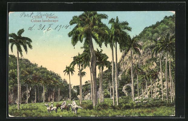 AK Paisaje, Eselreiten unter Palmen