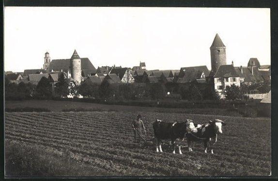 Foto-AK Dinkelsbühl, Teilansicht u. Feld mit Ochsengespann