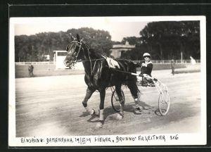 AK Einspann. Damenfahr 29.VI.29, Sieger Brunno mit Fr. Leitner, Trabrennen