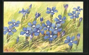Künstler-AK Anna Haller: blühende blaue Blumen