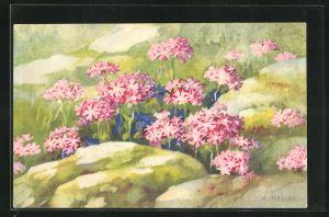 Künstler-AK Anna Haller: rot blühende Blumen
