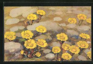 Künstler-AK Anna Haller: gelb blühende Blumen