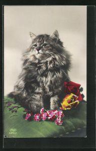 AK Getigerte Langhaar-Katze und Blumen