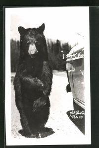 AK I thank you!, Stehender Bär vor einem Auto