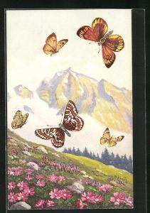 Künstler-AK Schmetterlinge der Arten Militaéa idúna und Cólias hecla