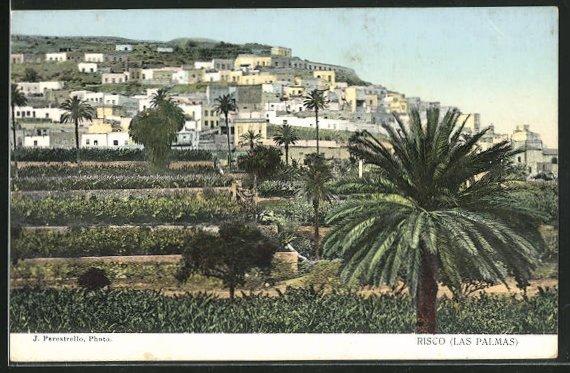AK Risco, Las Palmas, Blick von Felder und Palmen auf Stadt