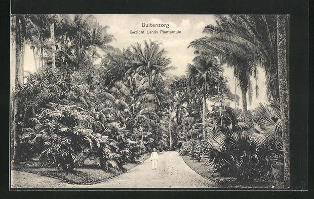 AK Buitenzorg, Gezicht Lands Plantentuin