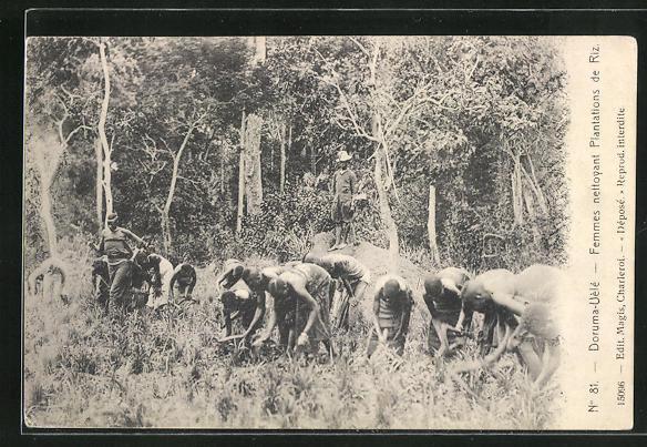 AK Doruma-Uele, Femmes nettoyant Plantations de Riz
