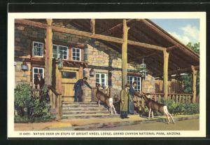 AK Grand Canyon Village, AZ, native Deer on steps of Bright Angel Lodge